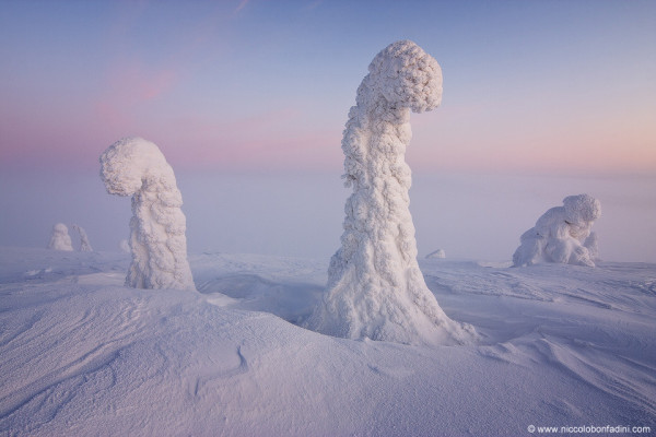 Sentinels of the Arctic