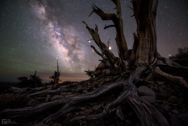Galaxy and Planets Beyond Bristlecone Pines