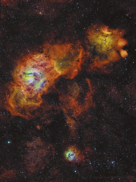 Sagittarius Sunflowers