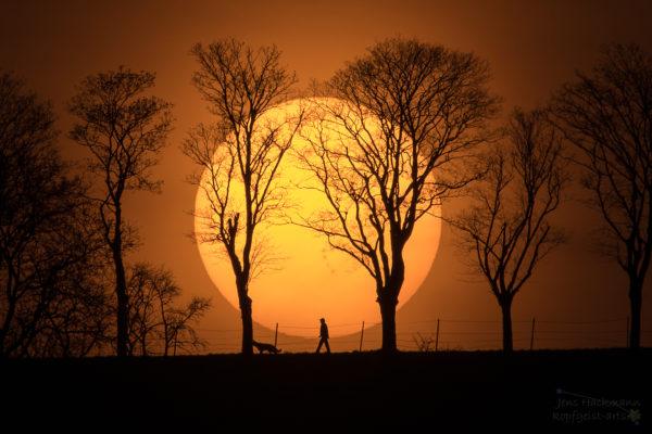 Man, Dog, Sun